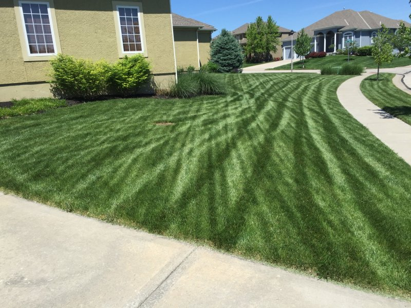 Lawn-6-Step-Fertilizer-Application-Example-1