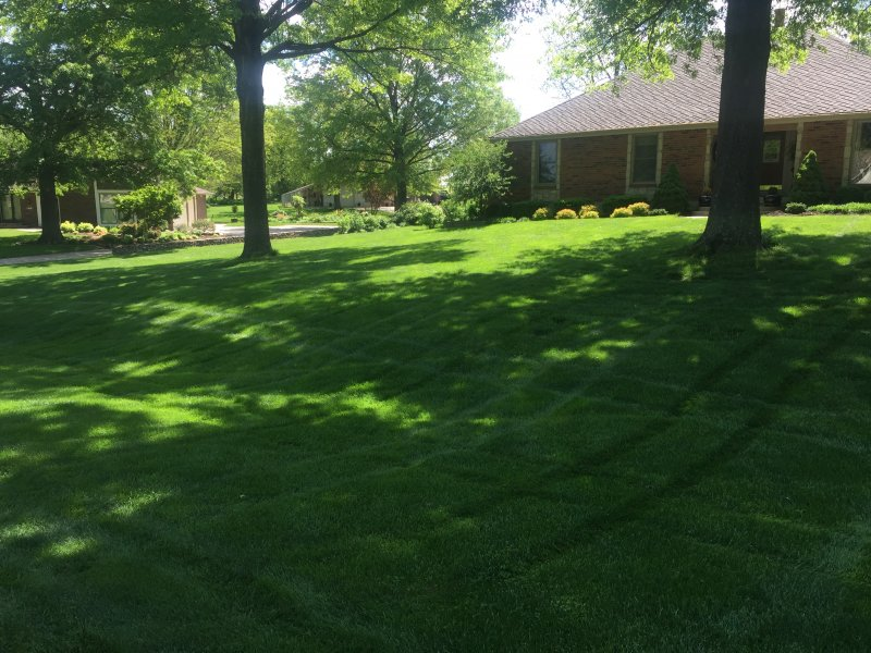 Lawn-6-Step-Fertilizer-Application-Example-4