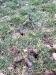 Lawn-Aeration-Aerate