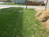 Lawn-6-Step-Fertilizer-Application-Client-Left-Comparison