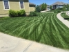 Lawn-6-Step-Fertilizer-Application-Example-1