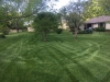 Lawn-6-Step-Fertilizer-Application-Example-5