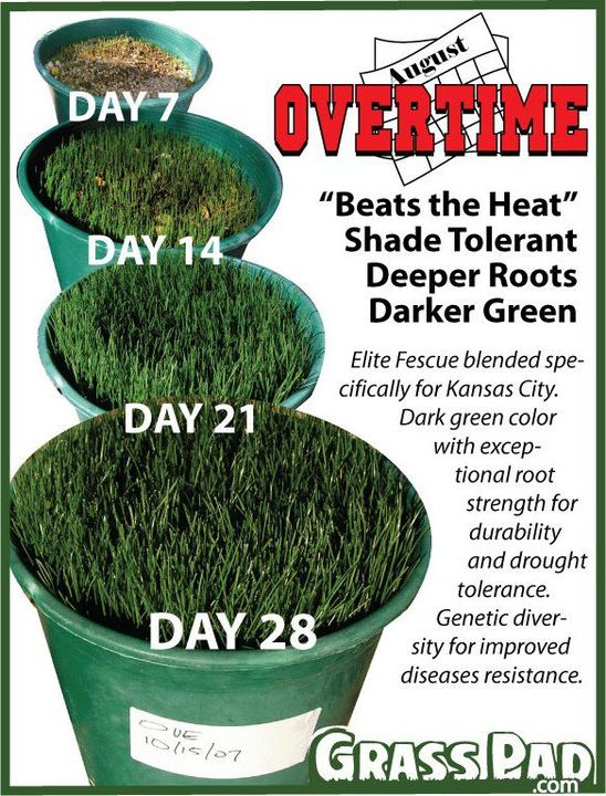 Fescue grass seed for the Kansas City area