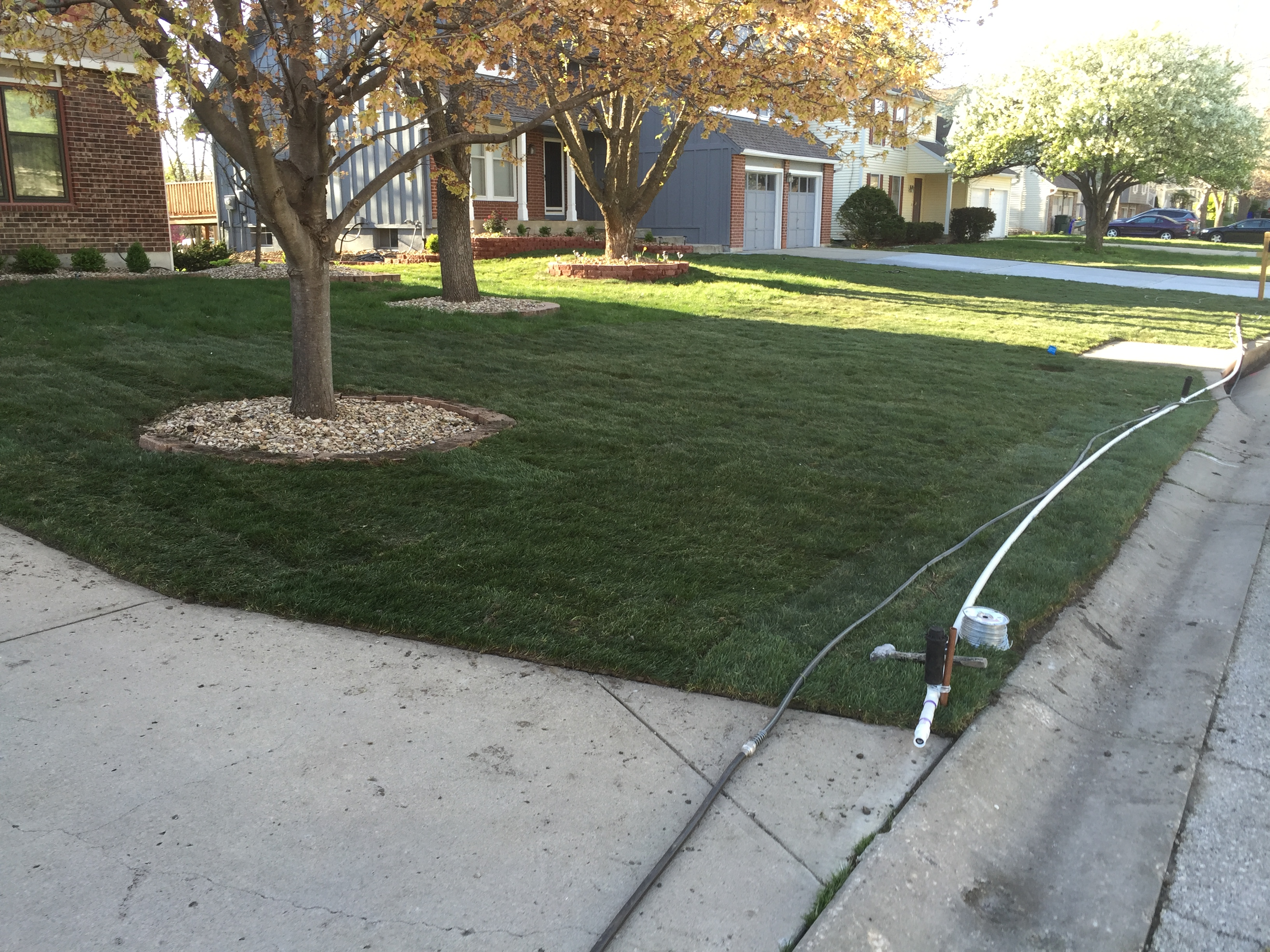 Temporary Irrigation System : Public works lawn restoration with sod and temporary